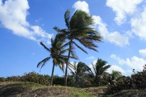 Плажът Tropicoco